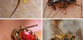 قواعد الإسعافات الأولية لدغات الحشرات: ما يجب القيام به أولا