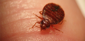 الحشرات يمكن أن تكون خطرة على البشر