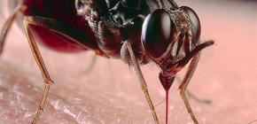 حول لدغ الحشرات والعلاج