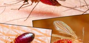 لدغات من أنواع مختلفة من الحشرات وصورها
