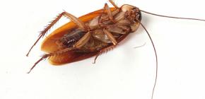 التخلص من غزوات الصراصير في المنزل