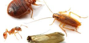 كيفية محاربة الحشرات المنزلية في الشقة
