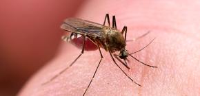وسائل للحماية من لدغ الحشرات: مراجعة الخيارات الفعالة