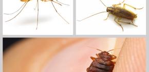 مبيدات الحشرات مبيدات الحشرات في المنزل: استعراض المخدرات