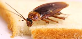 كيف يمكنني التخلص من الصراصير في الشقة