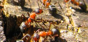 كيف تستعد النمل لفصل الشتاء