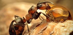 صور لأنواع مختلفة من النمل وميزات مثيرة للاهتمام في حياتهم