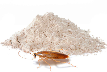 مساحيق لإبادة الصراصير: استعراض وسائل فعالة