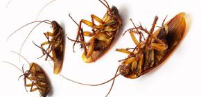المؤامرات ضد الصراصير